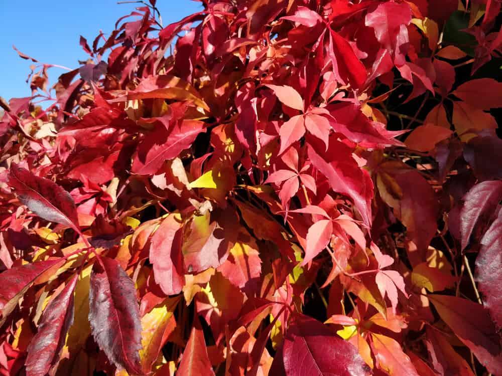 Kick the leaves